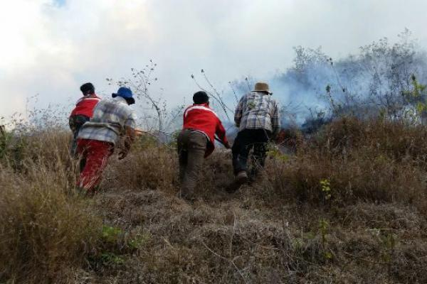 Kawasan Taman Nasional Gunung Rinjani Terbakar