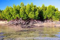 Mangrove Center dan Upaya Penyelamatan Kawasan Pesisir