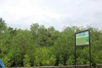 Pemkot Pariaman Kembangkan Kawasan Hutan Bakau Jadi Destinasi Wisata Baru