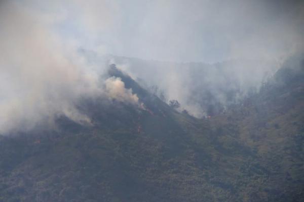 Kebakaran Hutan, Jalur Pendakian Gunung Talang Ditutup Sementara