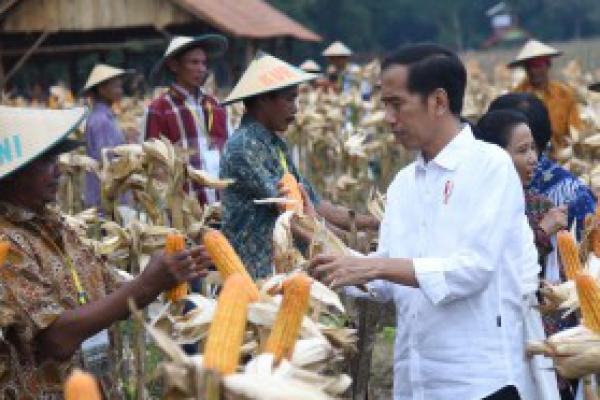 Presiden Jokowi Imbau Kepala Daerah Tidak Buat Aturan yang Menghalangi Investasi