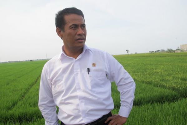 Mentan Lepas Ekspor Bunga Krisan dan Teh Hitam di Cianjur