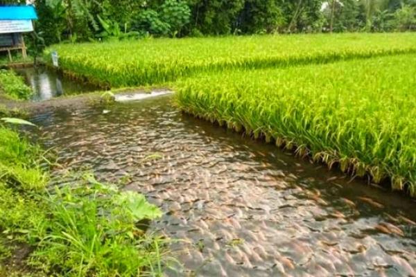 Indonesia-Taiwan Kerja sama Bidang Pertanian