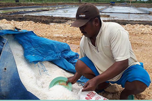 Produksi Lampaui Target, Harga Garam di Sumenep Anjlok