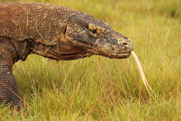 UNESCO Minta Pemerintah Jokowi Hentikan Pembangunan Proyek Taman Nasional Komodo