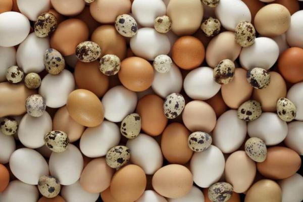 Lebih Sehat Mana Telur Ayam dengan Telur Puyuh?