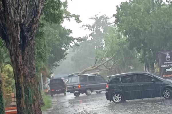 Angin Puting Beliung Melanda Sumenep, Satu Orang Tertimpa Pohon