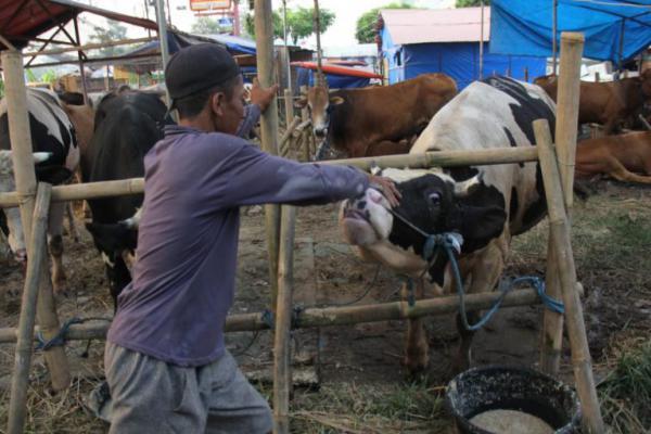Pemprov DKI Tegaskan Larangan Jual Hewan Kurban di Trotoar