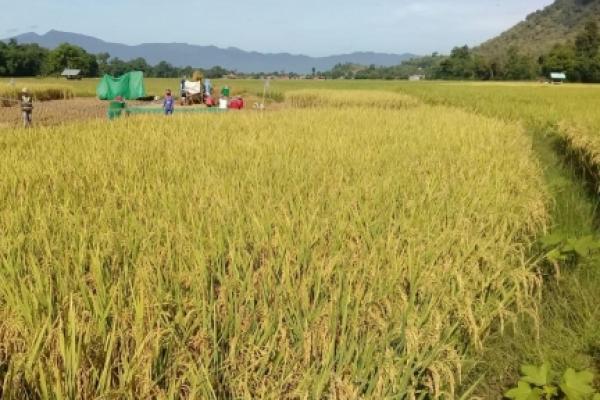 Meski Terdampak Corona, Petani NTB Tetap Produksi Panen