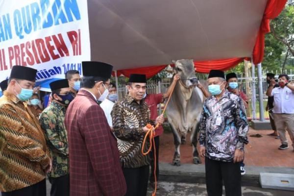 Presiden Jokowi Serahkan Sapi Kurban Berat 1 Ton ke Masjid Istiqlal