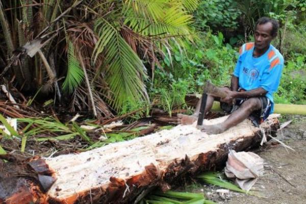 Menjaga Ketahanan Pangan Lewat Perlindungan Hutan Sagu di Papua