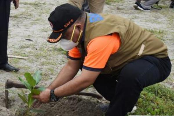 BNPB dan Pemkot Pariaman Tanam 1.000 Pohon Pinago di Pesisir Pantai