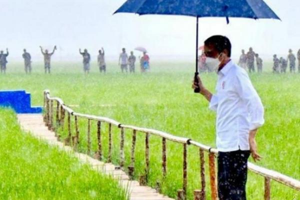 Jokowi Tinjau Food Estate di NTT, Lumbung Pangan Baru Indonesia Timur