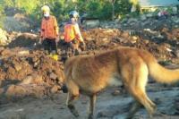 SAR Dog Bantu Temukan Satu Jenazah Warga Kabupaten Kupang