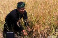 Gus AMI Minta Pemerintah Berikan Perhatian Serius Sektor Pertanian