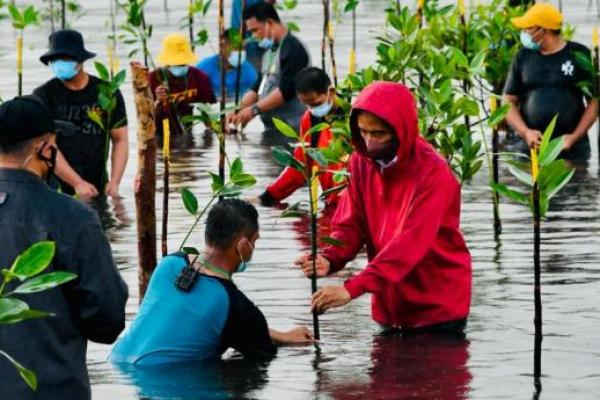 Presiden Jokowi Ikut `Nyemplung` Tanam Mangrove di Pantai Batam